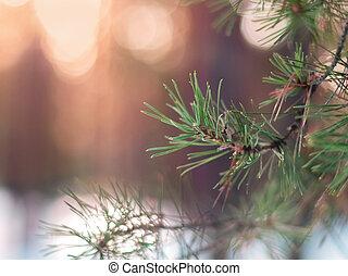 abeto, conceito, inverno, coloridos, luzes, decoração, árvore, pinho, obscurecido, forest., experiência., morno, desenho, space., ramo, cópia, natal