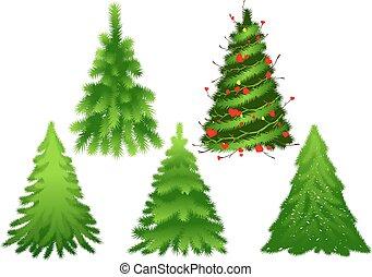 abeto, conjunto, aislado, pino, árbol., verde blanco, navidad