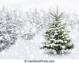 abeto, grueso, árbol, nieve