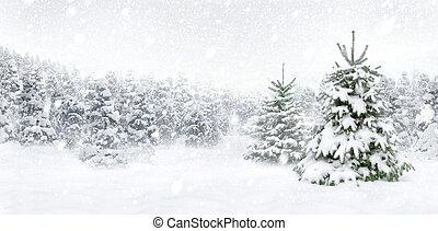 abeto, grueso, nieve, árboles