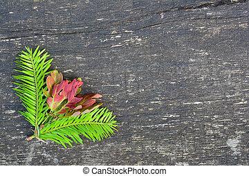 abeto, hojas, ramitas, roble, plano de fondo