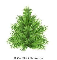 abeto, illustration., luxuriante, árvore, isolado, vetorial, branca
