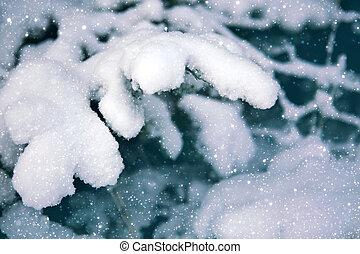 abeto, inverno, nevado, árvore, forest., ramo