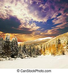 abeto, invierno, bosque