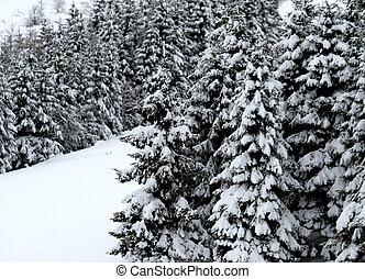 abeto, montanha, neve, árvores, coberto