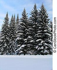 abeto, nieve, árboles, debajo