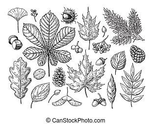 abeto, otoño, Conjunto, conos, hojas, bayas, nueces, vector,...