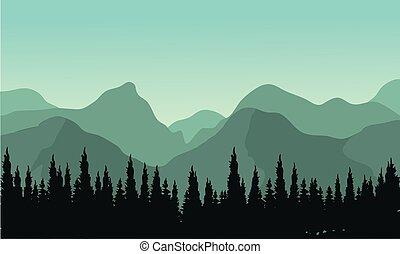 abeto, silhuetas, floresta, árvores, noturna