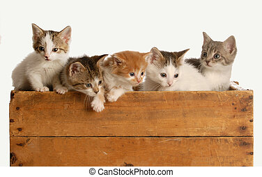 abfall, von, fünf, babykatzen