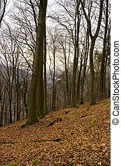 abfallend, wald, in, winter