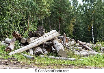 Abholzung Englisch