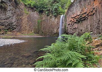 Abiqua Falls in Spring - Abiqua Falls with Bracken Ferns by...