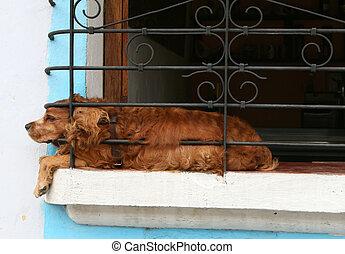 ablak, kutya