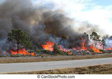 ablaze, フロリダ, 森林