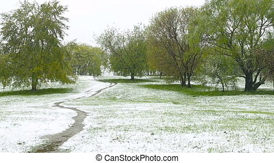 Abnormal weather. Snow goes on the green trees in the...