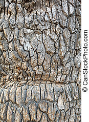 aboiement arbre, chêne