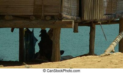 Aboriginal Stilt House, Belum Rainforest, Malaysia -...