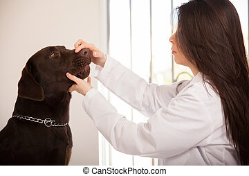 About to examine a dog's mouth
