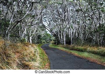 Above a cover of Koa Limbs - A tunnel of Koa Trees line the ...