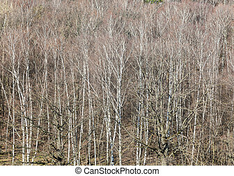 above view of bare trees in forest on March day