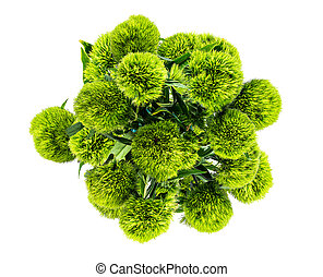 above view of bunch of flowers Dianthus barbatus green ball ...