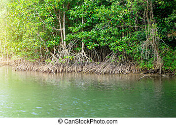 Above view of mangrove forest in thailand