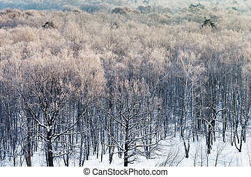 snowy forest in cold winter morning