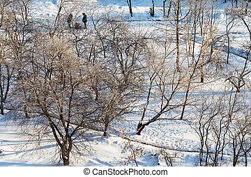 snowy urban park in sunny winter day