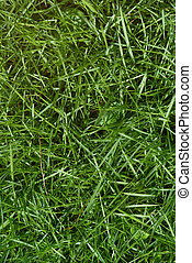 Above view on green grass