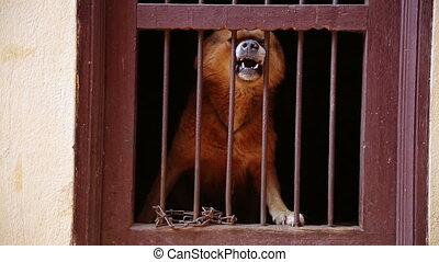 aboyer, cage, sien, chien