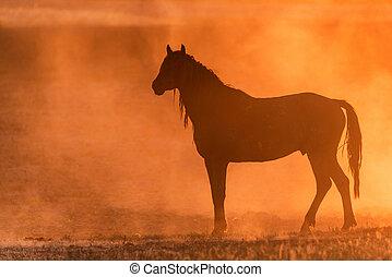 abrasioni, cavallo selvaggio, tramonto, prato