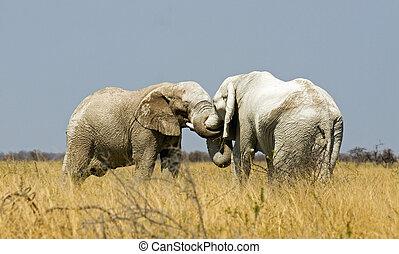 abrazo, elefantes
