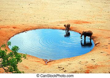 abrevadero, elefante