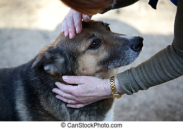 abri, animaux, chien, gens sans abri