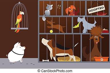 abri, dessin animé, animal