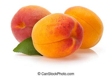 abricot, fond blanc