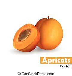 abrikoos, snede, pit, geheel