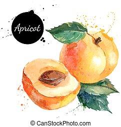 abrikos, hånd, watercolor, baggrund, stram, hvid, maleri