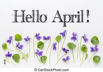 abril, flores, hola, saludos, viola