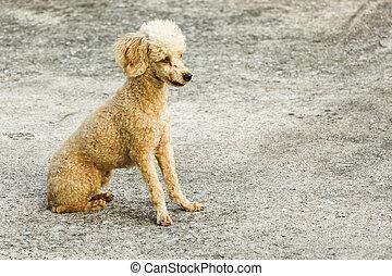 absent-minded., ∥あるいは∥, 悲しい, ムード, 犬