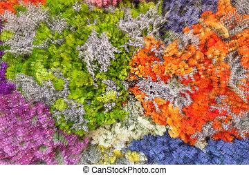 abstract, achtergrond, van, kleurrijke bloemen