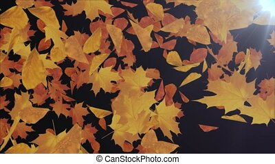 Abstract Autumn maple leaves falling 4K Animation Loop background Alpha channel. kchestnut, linden, rowan, hornbeam, grape leaves Leaf fall. Romantic, thanksgiving, winter, season, wedding.