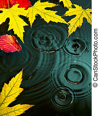 abstract autumn Rain background fall yellow leaves