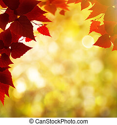 Abstract autumnal backgrounds with beauty bokeh and maple foliage