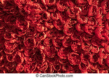 Abstract background . Close-up of red tulips flowers