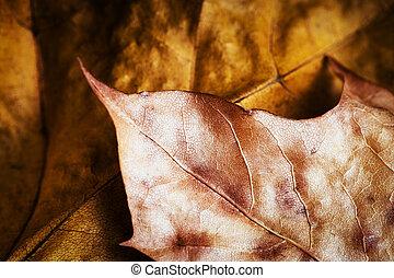 detail of golden autumn leaves