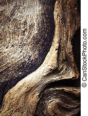 detail on weathered piece of wood