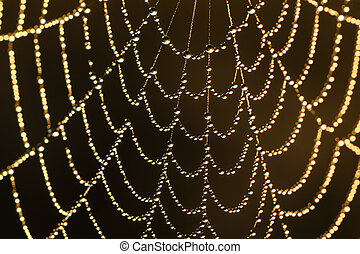 background from a web shine in the sun