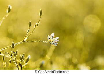 background from flowers blossoming on a meadow