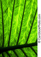 abstract background leaf and his veins in the light